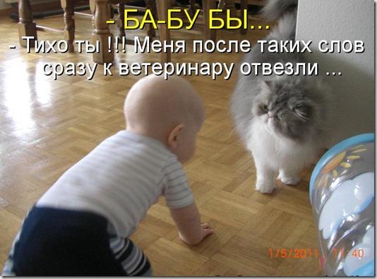 kotomatritsa_qk