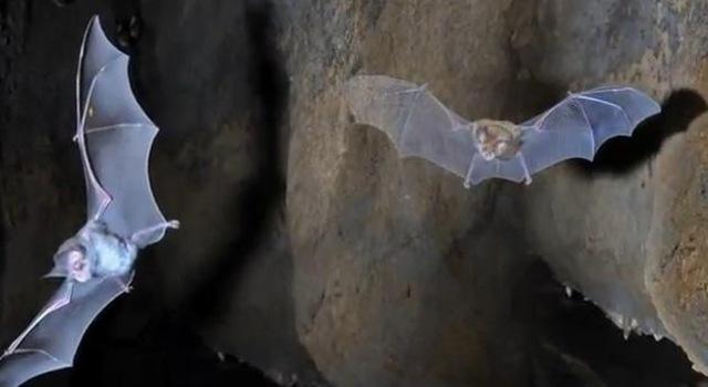 morcegos[4]