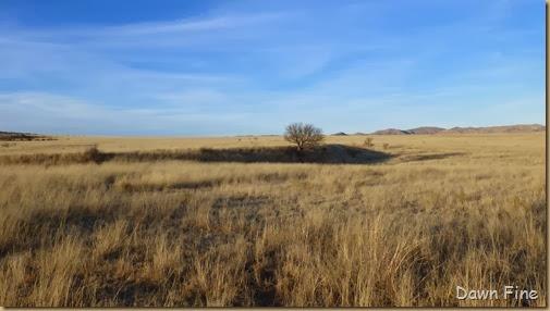 San Rafael Grasslands_012