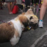 Pet Express Doggie Run 2012 Philippines. Jpg (15).JPG