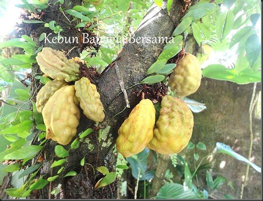 Nam Nam fruit