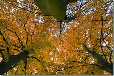 autumn-colors-fall-018