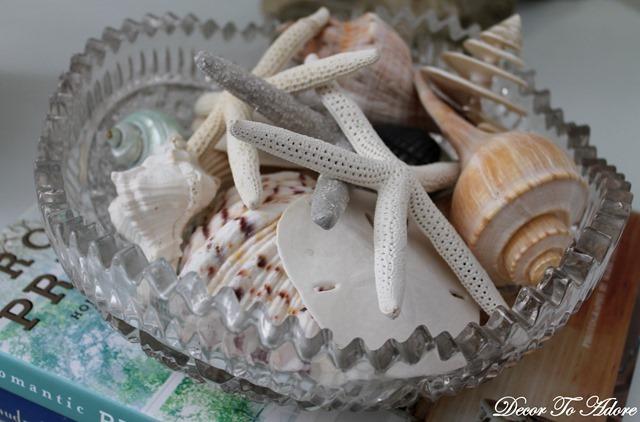 seashells 026