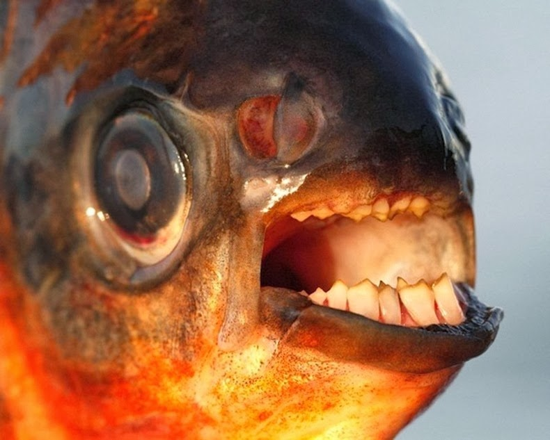 scary freshwater fish