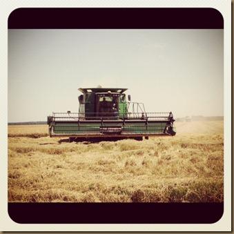 harvest8
