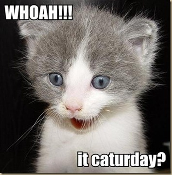 whoah-it-caturday