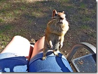 Lake bike ride and chipmunks 142