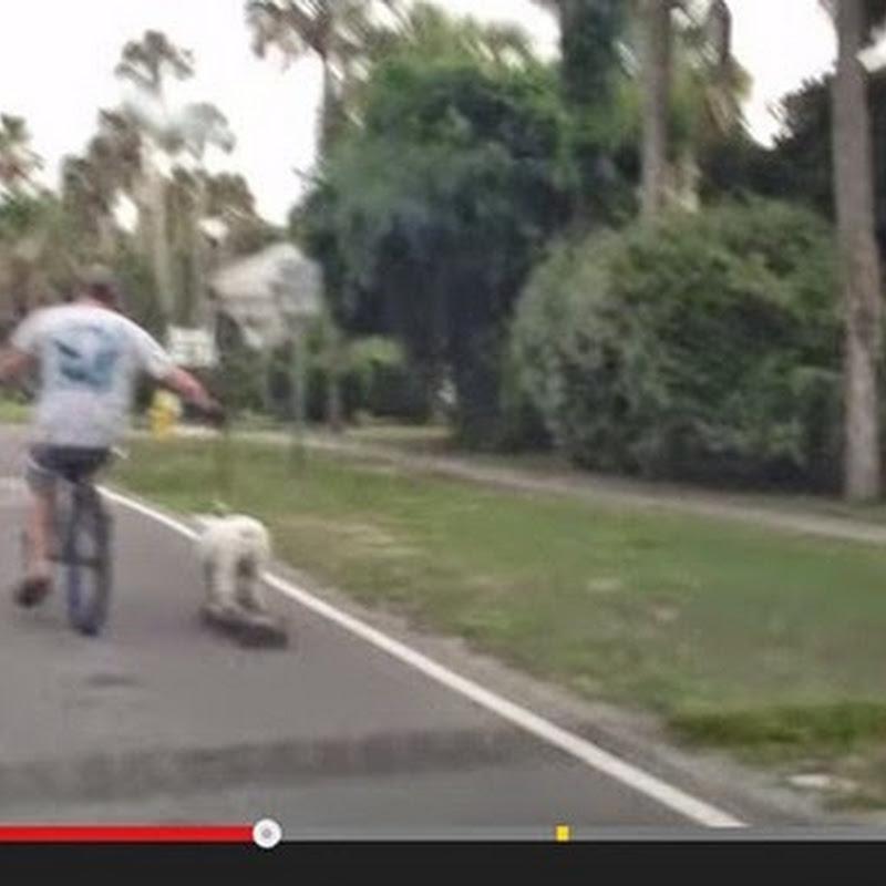 Ένας νέος τρόπος να πάτε βόλτα το σκύλο σας
