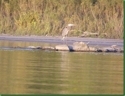 Illinois River Kayak #2 Wednesday 042A