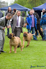 20100513-Bullmastiff-Clubmatch_31167.jpg