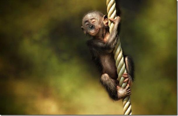 funny-animals-cute-34