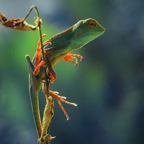menikmati pagi indah by Irfan Hikmawan - Animals Reptiles ( macro, macrophotography, moody, reptile, animal )