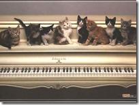 gato pianista blogdeimagenes (20)