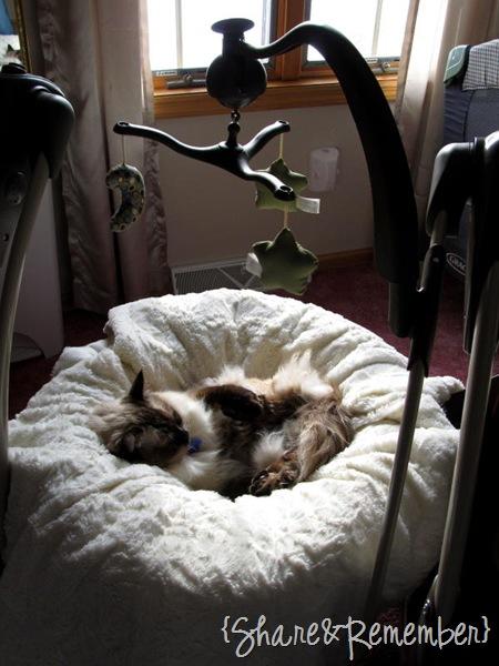 catinswing