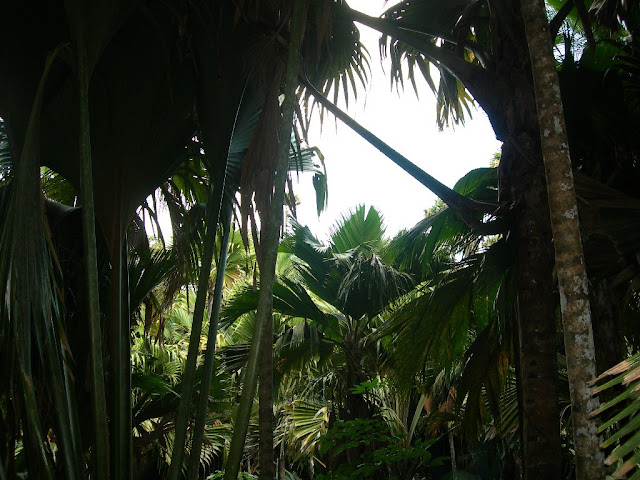 seychelles2_20070412_1792311207.jpg