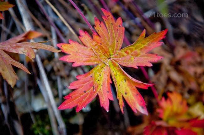 2013-10-12 Utah 89800