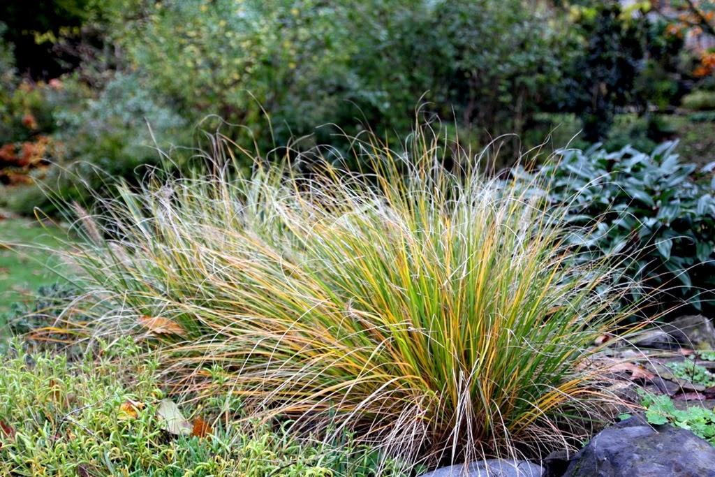 L 39 automne 6 jardin de nadya for Le jardin des 4 saisons pusignan