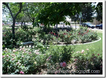 MCC Rose Garden 22