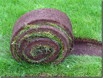 a beautiful thing: rolled sod