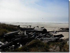 The beach in florence OR