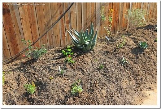 140316_desert_garden_planting4