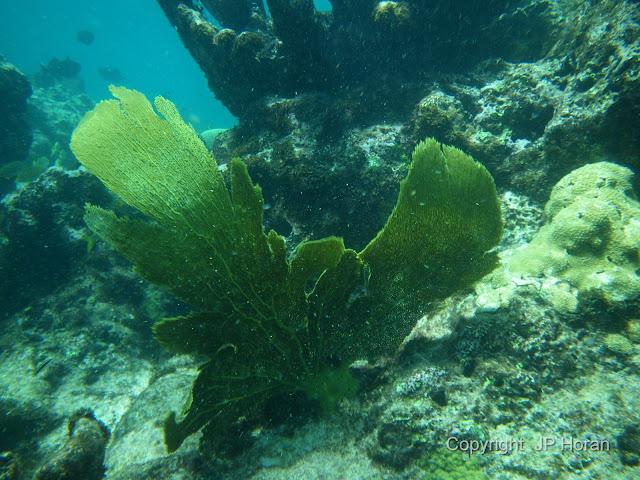 Buck Island Reef - IMGP2340.JPG