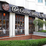 downtown Seoul the coffee bean & tea leaf in Seoul, Seoul Special City, South Korea