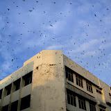 ビントゥルの街中にて 上層階をバード・ハウスに改造したショップ・ハウス / Downtown Bintulu: a commercial building, whose upper floors are converted into a bird house