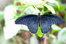 2013-4-25-vlinder2.jpg