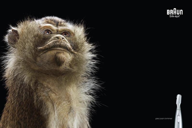 Monkey 3