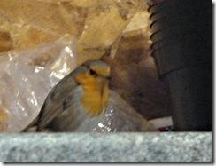 paddock robin