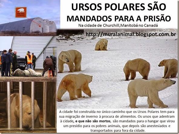urso_polar