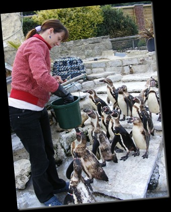 Serena feeding Penguins DSCF4198