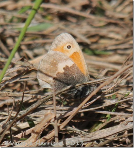29-small-heath