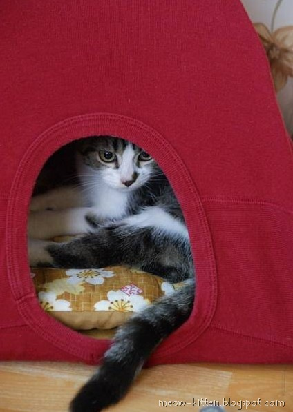 DIY cat tent with old t shirt 5