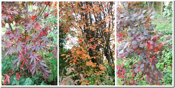 Autumn Trees Collage