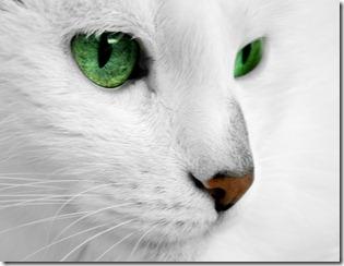 caldo-soffrono-gatti-rimedi
