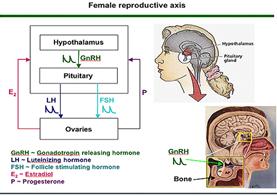 aksis hormon reproduksi wanita