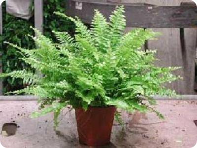 10 piante d appartamento che ripuliscono l 39 aria di casa - Piante che purificano l aria in camera da letto ...