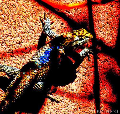 8. Lizard extreme-kab