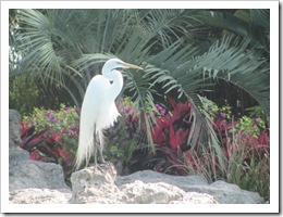 Florida vacation Epcot white egret