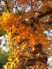 BoyceThompsonArboretumStatePark-67-2011-11-28-19-40.jpg