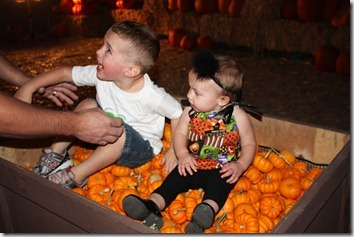 pumpkin patch 048