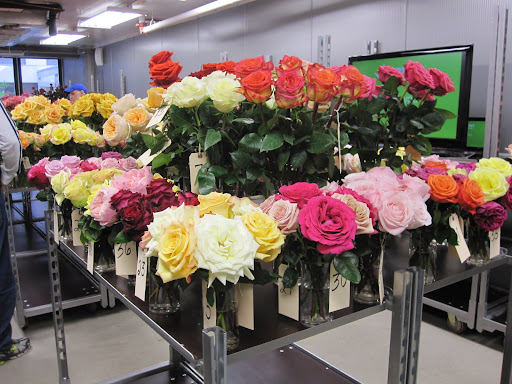 The reason why you can not buy these flowers yet is because they have not yet been produced in mass amount and the distributors are trying to decide if the flowers would be liked or disliked by rose-buyers.