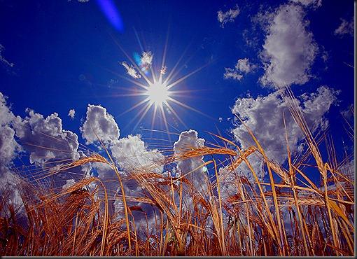 elokuun päivä aurinkoinen 016