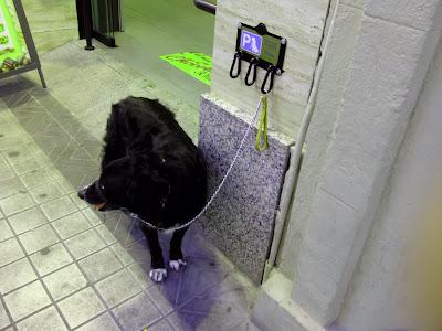 Parking de perros Frutos Secos El Rincón amarre ate perro