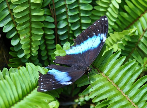 2013-07-05 butterfly pavilion (129)