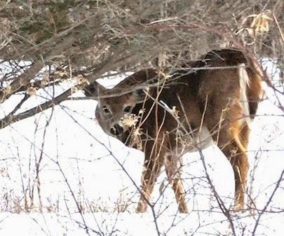 20150318_151853-deer