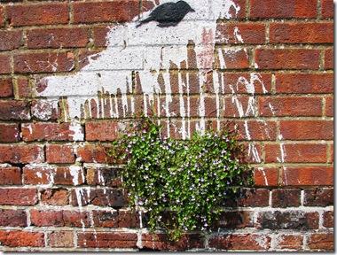 20120522 Cymbalaria & graffiti Hastings (44)