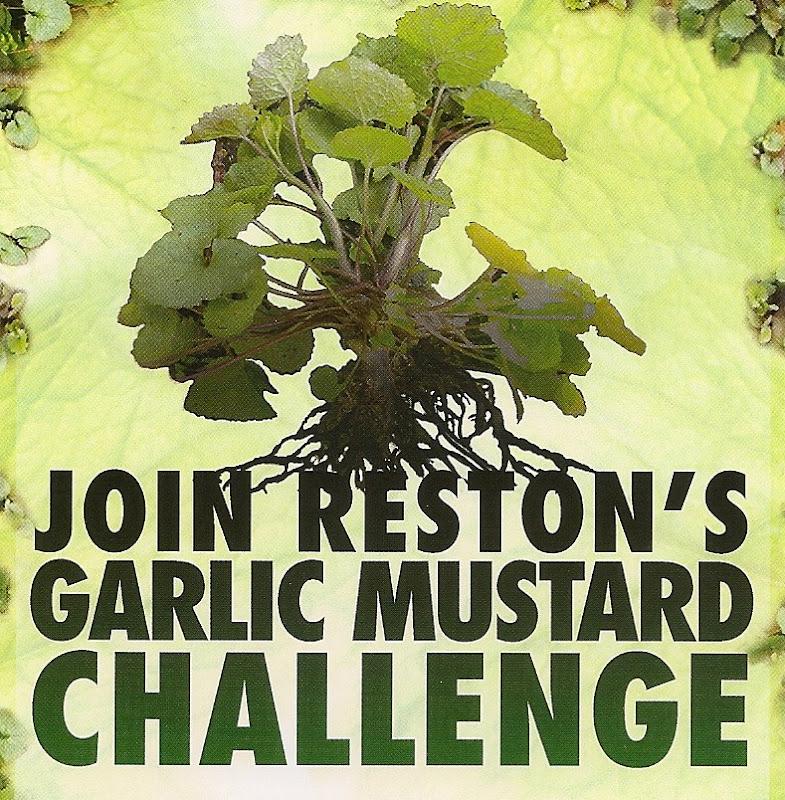 garlic mustard.jpg